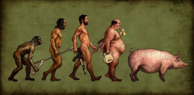 Evolution, monkey to man to pig, 1